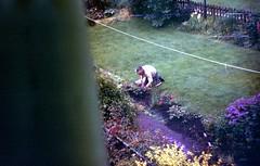 img236 (foundin_a_attic) Tags: april 1973 street houses homes fashion eveyday life england suburbs garden man gardening spying