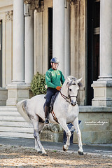 Real Escuela Student (giulia_basaglia) Tags: horse stallion man equestrian rider building historical real esquela spain jerez outside sicab