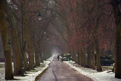paths and roads (JoannaRB2009) Tags: path alley avenue tree trees nature snow autumn fall winter weather rain rainy alajajesionówpensylwańskich lamps lanterns benches man walking umbrella park parknazdrowiu łódź lodz polska poland