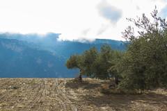 Spain - Granada - Monachil - Los Cahorros Footpath (Marcial Bernabeu) Tags: marcial bernabeu bernabu spain espaa andalucia andaluca andalusia granada monachil cahorros sendero footpath path trail olivos olive trees clouds nubes