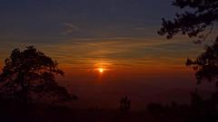 Sleepy forest (Michal Hajek) Tags: d5500 18140mm nikkor czphoto czechrepublic