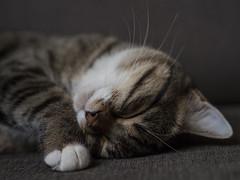 Avignon (lauriepetsitterparis) Tags: chat chatte cute mignon miaou petsitter catsitter cat chatonne chaton