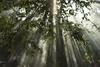 Smoke and light (jamiethompson01) Tags: zeiss carl thailand december 55mm sony a7 mk2 18f 2016 light smoke trees