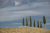 row of trees (jazz_0902) Tags: row trees nature natura nuvole tuscan tuscany toscana tuscanvineyards alberi clouds countryside campaign cipressi blue landscape