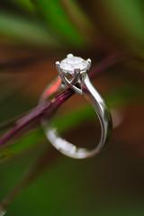 Longwood Gardens (Natalie Franke) Tags: water rain gardens engagement pennsylvania ring pa rainy winner droplet bling longwood