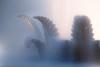 293/365. Traumzaubermärchenbrunnen (he-sk) Tags: berlin fountain germany day293 guesswhereberlin 20102014 3652014 365the2014edition
