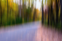 lights in the forest....in EXPLORE 11-01-2014 (LotusMoon Photography) Tags: camera color nature landscape movement icm intentional intentionalcameramovement
