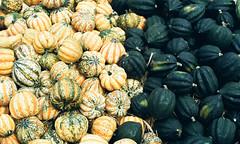 Gourd Pumpkins (Past Our Means) Tags: halloween istillshootfilm filmisnotdead fall autumn connecticut gourd pumpkin 50mm canon ae1 kodak portra 800 film indiefilmlab