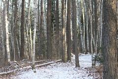 Lower Lynx Lake Trail - Hersey Lake Conservation Area Timmins Ontario Canada (Gerald (Wayne) Prout) Tags: lake ontario canada canon conservation trail lynx timmins discover northernontario prout ontarioyourstodiscover hersey lynxlake yourstodiscover ontarioconservationarea sevenohfive ontarioconservation canoneos60d northernontarioscenery herseylake herseylakeconservationarea northernontariopost ontarioexcepttorontohamiltonandottawa lowerlynxlaketrail geraldwayneprout