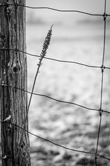 Fenced in (_Matt_T_) Tags: winter bw ontario pentax niagara smcpda70mmf24limited k5iis singlechallenges sinov2014