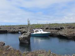 Galápagos - Isabela-206
