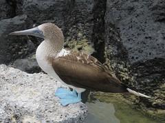 Galápagos - Santa Cruz-9