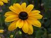 Yellow flower (Stella VM) Tags: flowers summer flower yellow garden цветя цвете градина жълт