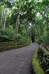 Monkey_3468 (ShellyBonoan) Tags: padangtegal ubud bali ricefields country farm ubudcentral monkey sanctuary temple forest sacred puradalemagugnpadangtegal templeofthedead padangtegalubud indonesia botanical