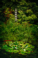Lilly pond and Statue in a Japenese Garden (fxgeek) Tags: nature statue gardens garden shrine peace spiritual wicklow japenese