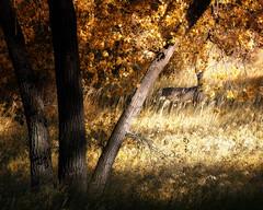 Young Buck Flickr (hunter20ga) Tags: autumn color fall leaves nikon midwest deer foliage prairie nikkor buck bismarck whitetail greatplains d4 7020028