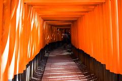 Fushimi Inari 1000 Torii (Yakinik) Tags: japan 35mm t tokyo kyoto inari sony    fe alpha za torii f28 fushimi sonnar nex   senbon   a7r yakinik 7r sel35f28z
