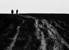 Walk this Way - Explored (dave.tay1or) Tags: blackandwhite bw silhouette flickr olympus explore omd lightroom m43 mft autumnfall em5 lr5 microfourthirds