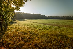 clearing (KK_photographics) Tags: sky sun tree green nature field fog landscape woods gras bushes acre