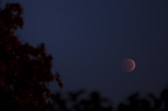 Eclipsed 09.08.14 (Danish Ehsan) Tags: red sky sun moon set night eclipse blood full rise lunar