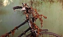 Soporific Transport (Junkstock) Tags: old bicycle photography photo junk rust photos decay transport rusty nostalgia photographs photograph rusted transportation nostalgic weathered aged artifact distressed corrosion decayed patina corroded relic oldstuff centralcal oldandbeautiful oldusedobjects altebenutztegegenstände