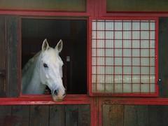 horse (andrea.galva) Tags: horse ride box cavallo