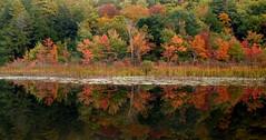 Northwest Bay reflections (edenseekr) Tags: autumn lake water reflections calm foliage redmaple northwestbay lakegeorgeny