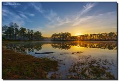 Enjoying the Sunrise (Fraggle Red) Tags: morning lake reflection clouds sunrise landscape island nationalpark florida gator alligator evergladesnationalpark campground hdr americanalligator enp longpinekey 7exp canonef1635mmf28liiusm miamidadeco dphdr canoneos5dmarkiii 5d3 5diii adobelightroom5
