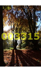 Flickr_003315 (lima_ho_htc) Tags: autumn trees light sun forest eppingforest shadows epping thegalaxy naturethroughthelens franbanks rememberthatmomentlevel4 rememberthatmomentlevel1 rememberthatmomentlevel2 rememberthatmomentlevel3 rememberthatmomentlevel7 rememberthatmomentlevel9 rememberthatmomentlevel5 rememberthatmomentlevel6 rememberthatmomentlevel8 rememberthatmomentlevel10
