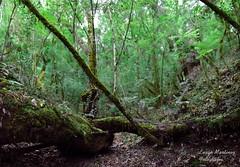 Enchanted forest (itslujan) Tags: trees green nature argentina forest 50mm woods rainforest san bokeh lorenzo valley enchanted salta method puna valles calchaquies brenizer bokehrama