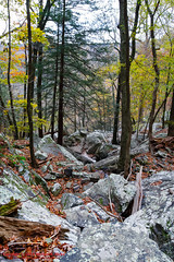 On Laurel Creek (mikerhicks) Tags: usa fall geotagged photography unitedstates hiking tennessee backpacking dayton laurelcreek tennesseestateparks laurelsnowpocketwilderness cumberlandtrailstatepark laurelsnowstatenaturalarea sigma18250mmf3563dcmacrooshsm cumberlandspring canoneos7dmkii geo:lat=3554675833 geo:lon=8502512667 laurelsnowsegment