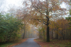 Foggy road (Infomastern) Tags: autumn mist tree fog forest woods skog hst trd dimma bkeberg