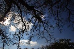eye in the sky (canonista76) Tags: city london nature fauna alberi canon landscape spider nuvole natura campagna fiori colori londra hdr sud 600d canon18