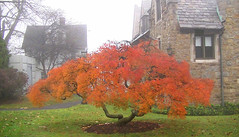 Last of fall at the College of New Rochelle (terryballard) Tags: