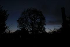 Dark Nights (Stace_xoxo) Tags: blue sunset white tree abbey silhouette canon purple dusk oxford bushes oxfordshire dorchester dorchesterabbey nught 1200d canon1200d