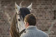 2014.11.02 - Ismal Nijst (NosChevaux.com) Tags: horses horse caballo cheval caballos chevaux paard paarden valiente classique dressage quitation noschevaux noschevauxcom ismalnijst