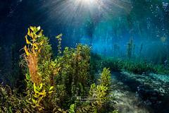 Fantastic world - 18538 (Francesco Pacienza - Getty Images Contributor) Tags: blue autumn sky sunlight green leaf lakes clear freshwater aquaticworld fantasticworld