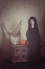 Happy halloween (Champignons) Tags: doll bjd mags dim abjd laia addamsfamily balljointeddoll balljointdoll balljoint dollinmind