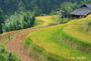 IMG_0547_Terraced fields