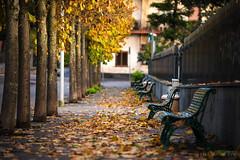Cadono le foglie... (Maurizio ) Tags: foglie alberi autunno ragalna d810