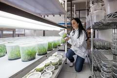 IMG_7323 (www.julkastro.co) Tags: plants living science research micro biology bacteria scientist ciencia biologia germs investigacion cib organism cientifico microscopes micologia angelarestrepo portraitangelarestrepo