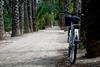 En bici por el palmeral