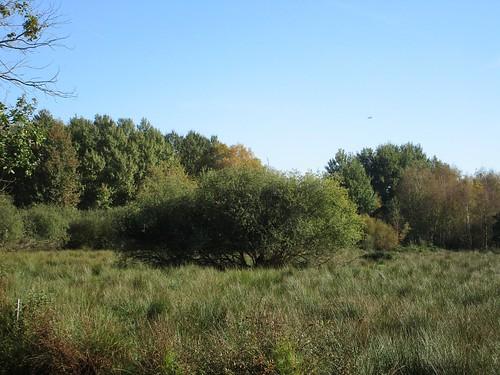 Weide, Moorgebiet am Ostufer Steinhuder Meer , NGIDn1935956900