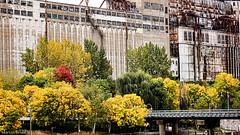 Contrast (Badhabit07) Tags: sony alpha nex7 automne fall tre arbre arbres tress couleurs colors bridge pont urbain urban nature rouille rust