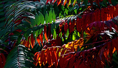 Autumn's Magical Array (jrussell.1916) Tags: leaves sumac autumn autumncolors green red orange yellow canonef70200f4lis14tc