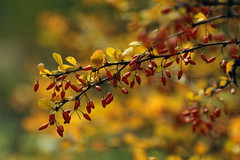 autumn time (zool18) Tags: nature green yellow canon color flower flickr foto flora forest life outdoor orange good botanic bokeh eos macro mark2 amazing home autumn awesome berry ukraine 7d red gardens garden d