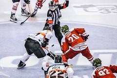 CRITELLI_hockey 20.10_2016_21184-2 (michelemv) Tags: hcbolzano hockey sportsughiaccio palasport bolzano canon calcioa5 ebel italia pattini sport