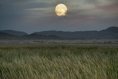 Moon Shot (magnetic_red) Tags: moon full moonrise sunset sky pink clouds mountains field green grass wetlands desert light tecopa deathvalley americanwest