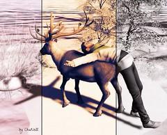 My Deer...pose 6 Pic-L-Art's (zaziaa resident) Tags: piclarts pose deer cerf