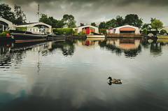 They came early... (b_represent) Tags: ente duck reflection aquaronde boats water